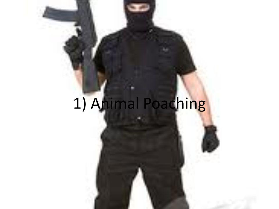1) Animal Poaching