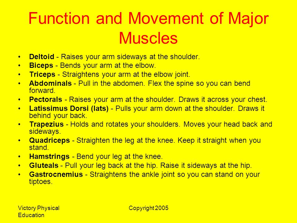 Victory Physical Education Copyright 2005 How the Muscles Move Muscles are attached to two different bones by tendons.