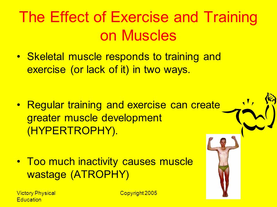 Victory Physical Education Copyright 2005 The Effect of Exercise and Training on Muscles When we exercise our bodies regularly and correctly with heavy workloads (Normally short, heavy and anaerobic) new muscle fibres are generated until the muscle has become large and strong enough to do the tasks required of them.