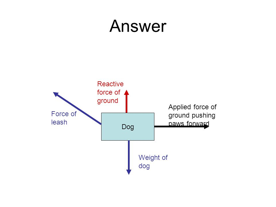 Answer Dog Applied force of ground pushing paws forward Reactive force of ground Force of leash Weight of dog