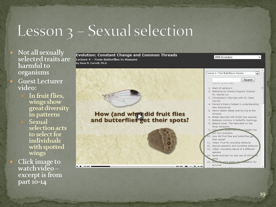 Not all sexually selected traits are harmful to organisms Guest Lecturer video: In fruit flies, wings show great diversity in patterns Sexual selection acts to select for individuals with spotted wings Click image to watch video – excerpt is from part 10-14 19