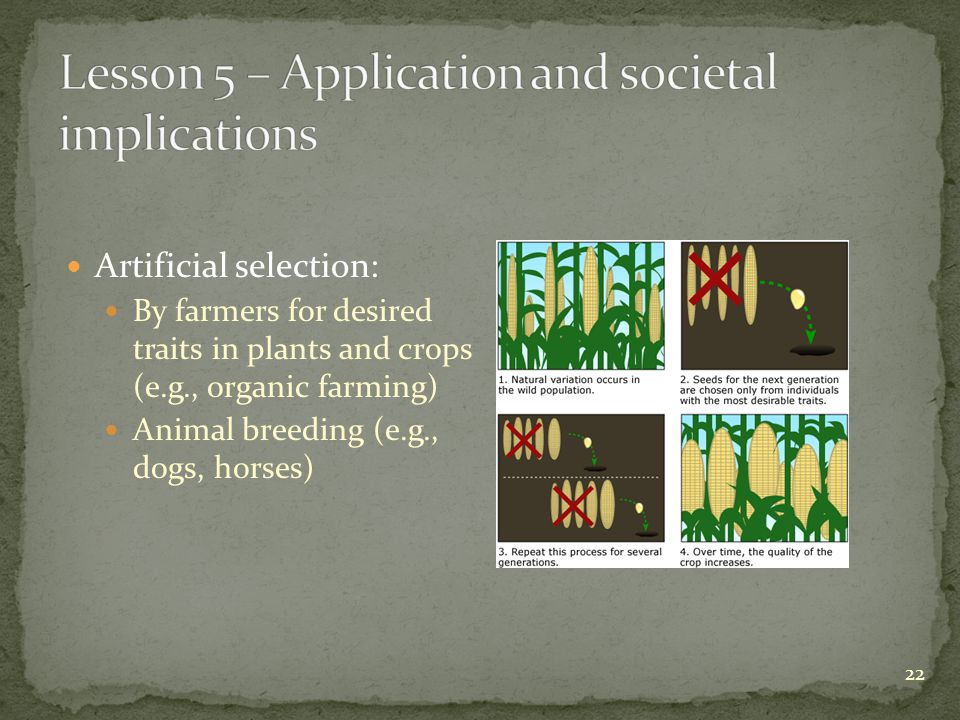 Artificial selection: By farmers for desired traits in plants and crops (e.g., organic farming) Animal breeding (e.g., dogs, horses) 22