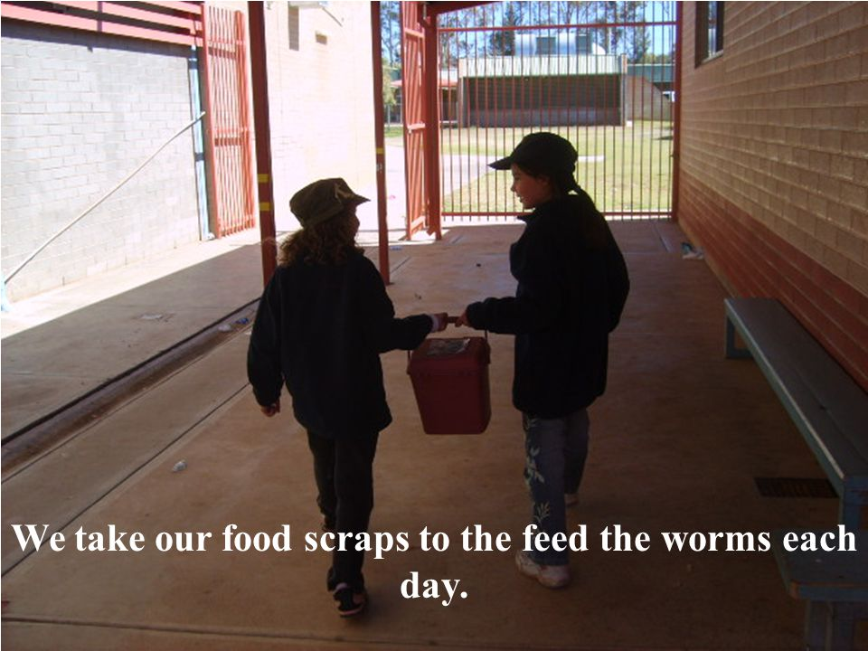 We take our food scraps to the feed the worms each day.