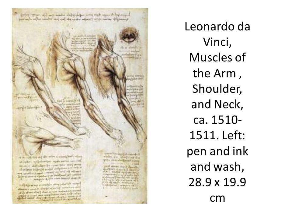 Leonardo da Vinci, Muscles of the Arm, Shoulder, and Neck, ca.