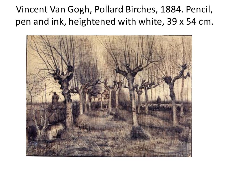 Vincent Van Gogh, Pollard Birches, Pencil, pen and ink, heightened with white, 39 x 54 cm.