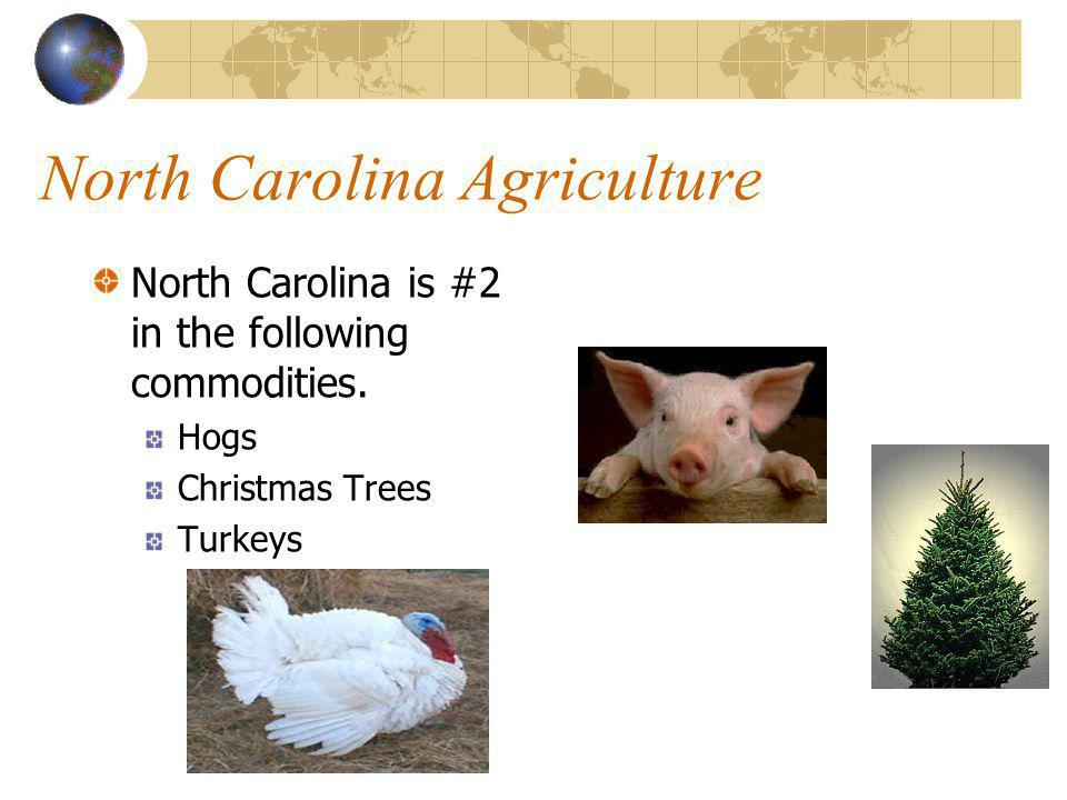 North Carolina Agriculture North Carolina is #1 in the following commodities. Tobacco Sweetpotatoes