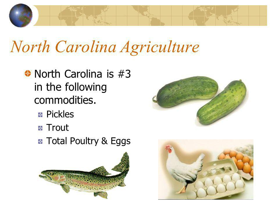 North Carolina Agriculture North Carolina is #2 in the following commodities. Hogs Christmas Trees Turkeys
