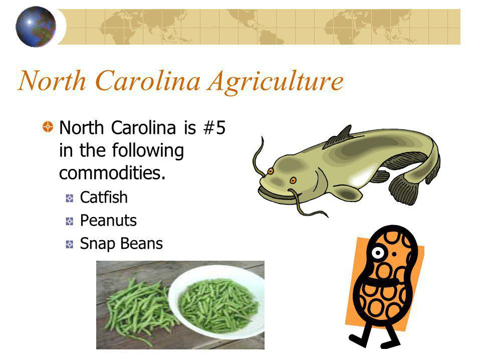 North Carolina Agriculture North Carolina is #4 in the following commodities. Blueberries Broilers Greenhouse/Nursery Strawberries
