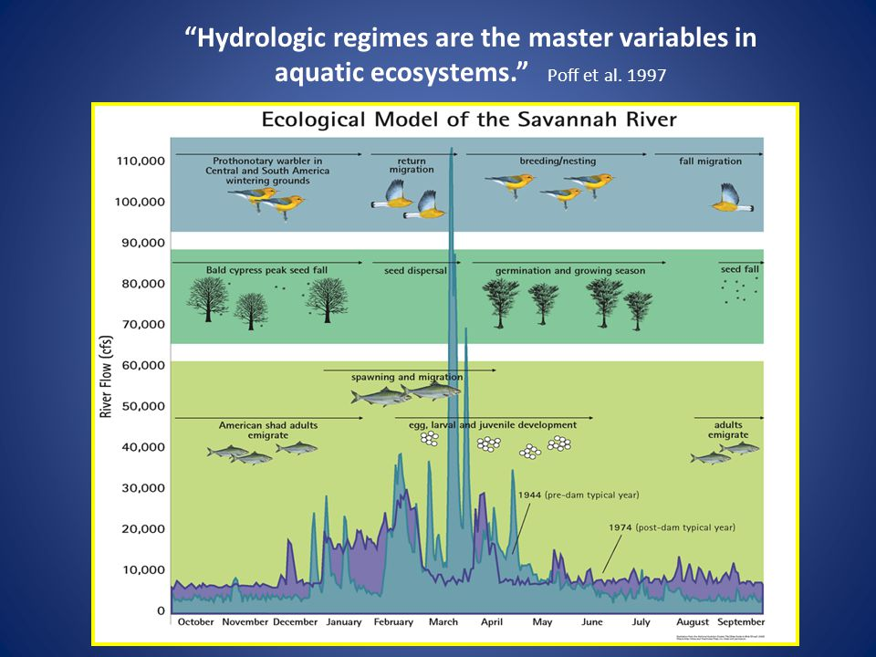 Hydrologic regimes are the master variables in aquatic ecosystems. Poff et al. 1997