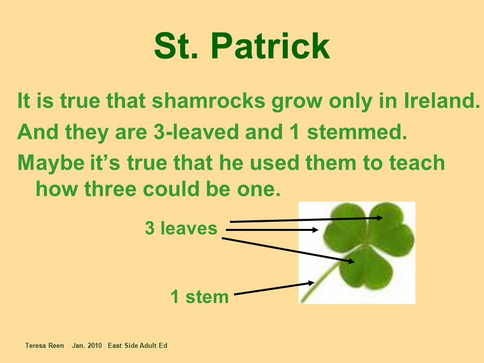 St. Patrick It is true that shamrocks grow only in Ireland. And they are 3-leaved and 1 stemmed. Maybe it's true that he used them to teach how three