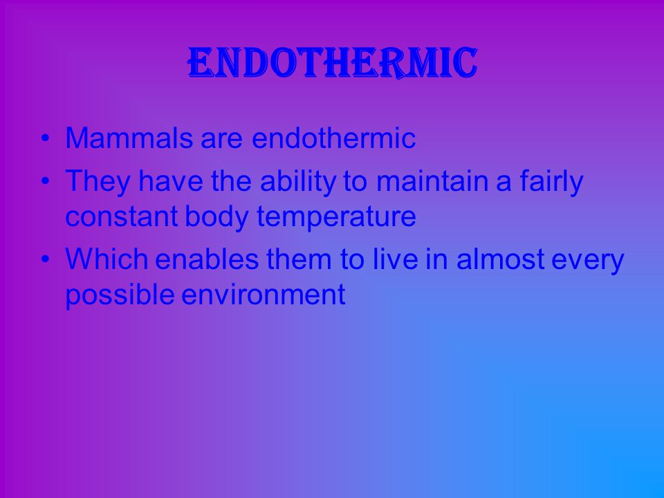 Endothermic Mammals are endothermic They have the ability to maintain a fairly constant body temperature Which enables them to live in almost every po