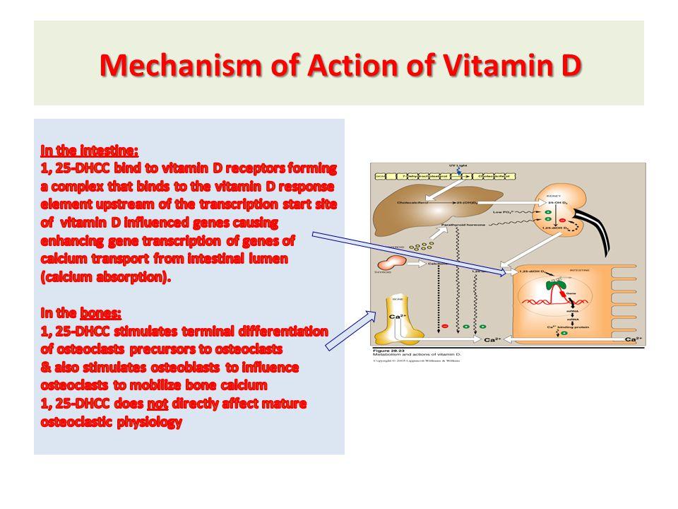 Mechanism of Action of Vitamin D Mechanism of Action of Vitamin D