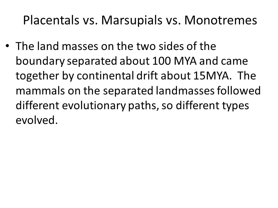 Placentals vs. Marsupials vs. Monotremes The land masses on the two sides of the boundary separated about 100 MYA and came together by continental dri