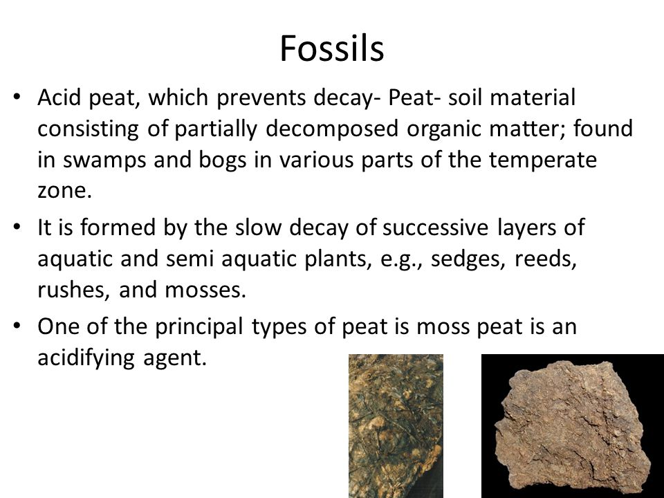 Fossils Acid peat, which prevents decay- Peat- soil material consisting of partially decomposed organic matter; found in swamps and bogs in various pa