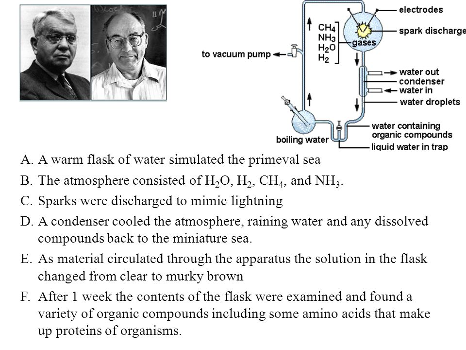 What are their conclusions.Organic compounds (amino acids) were formed from inorganic compounds.
