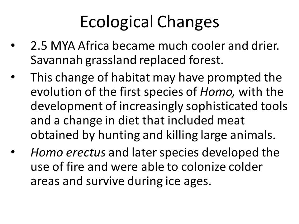 Ecological Changes 2.5 MYA Africa became much cooler and drier. Savannah grassland replaced forest. This change of habitat may have prompted the evolu