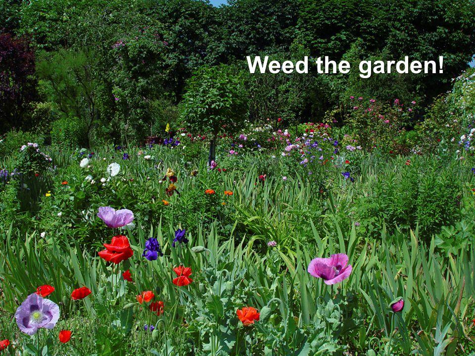 Weed the garden!