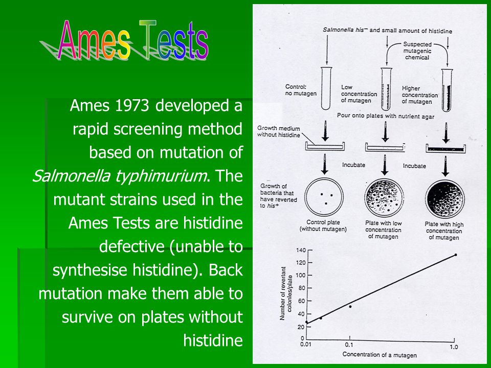 Ames 1973 developed a rapid screening method based on mutation of Salmonella typhimurium.