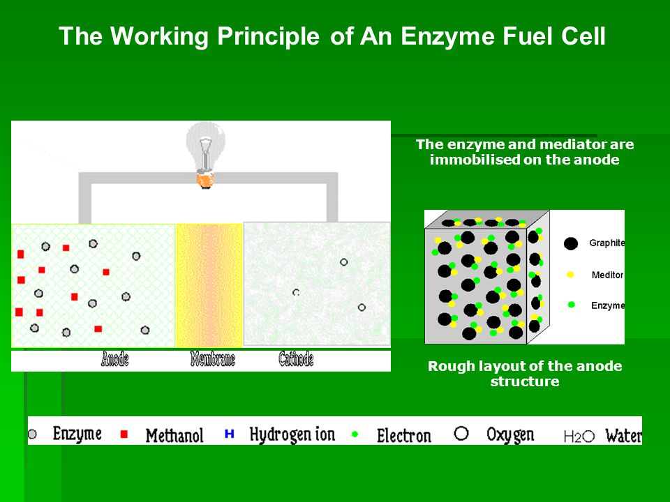 The Working Principle of An Enzyme Fuel Cell The enzyme and mediator are immobilised on the anode Rough layout of the anode structure