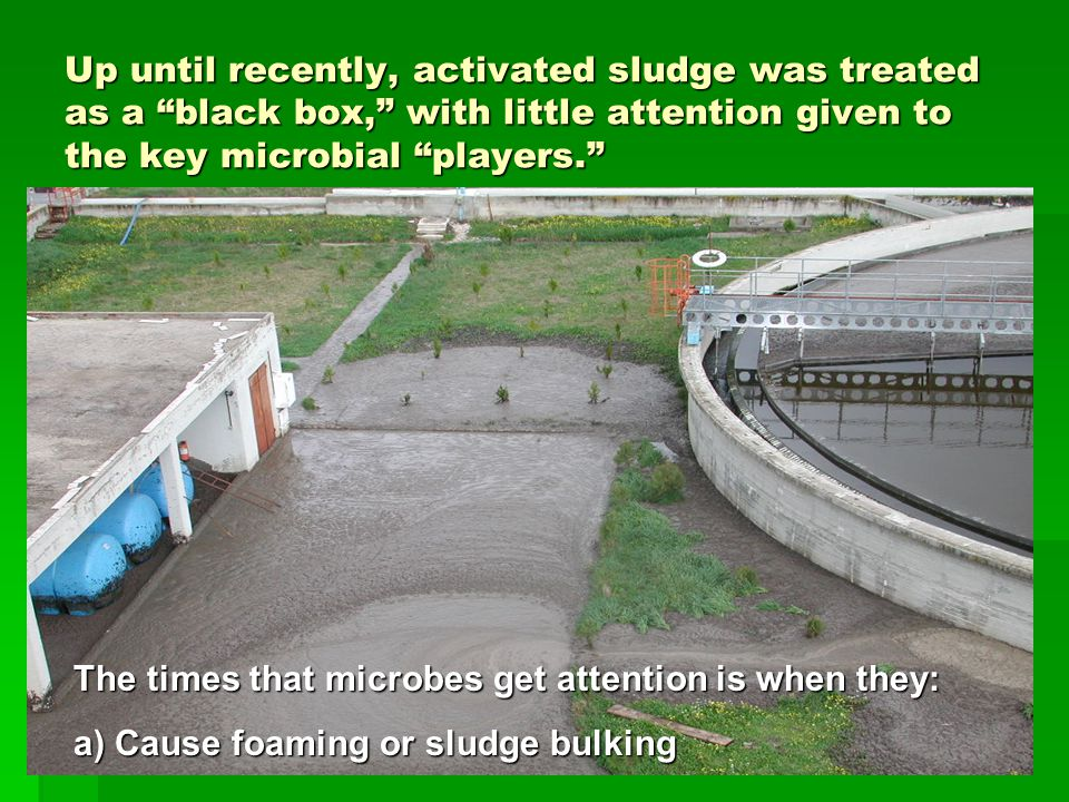 Up until recently, activated sludge was treated as a black box, with little attention given to the key microbial players. The times that microbes get attention is when they: a) Cause foaming or sludge bulking