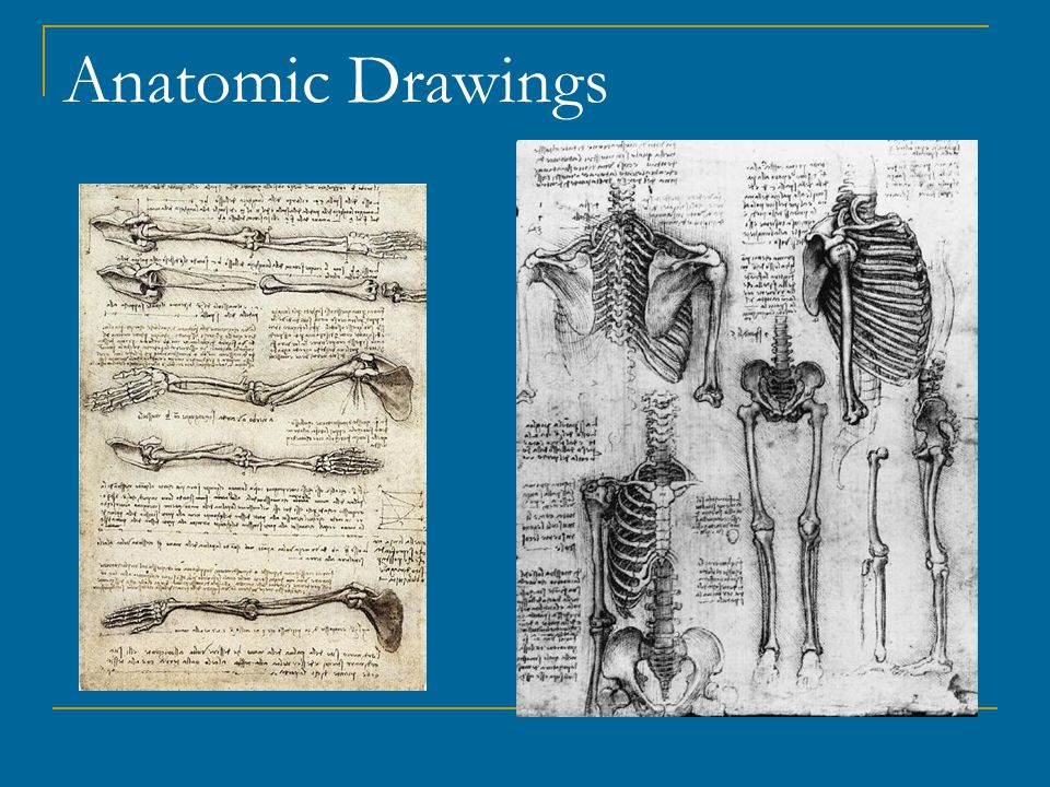 Anatomic Drawings
