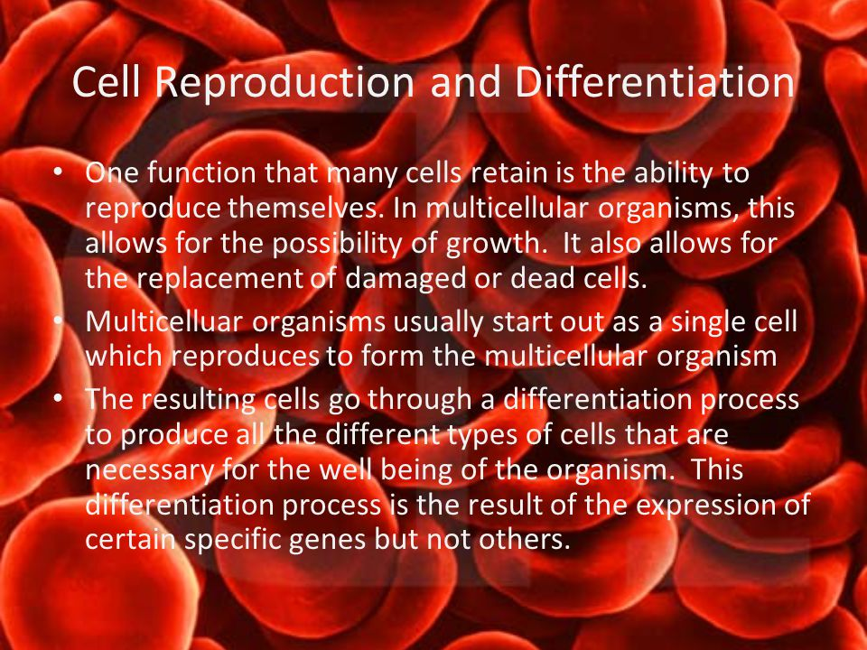 Cell Reproduction and Differentiation One function that many cells retain is the ability to reproduce themselves.