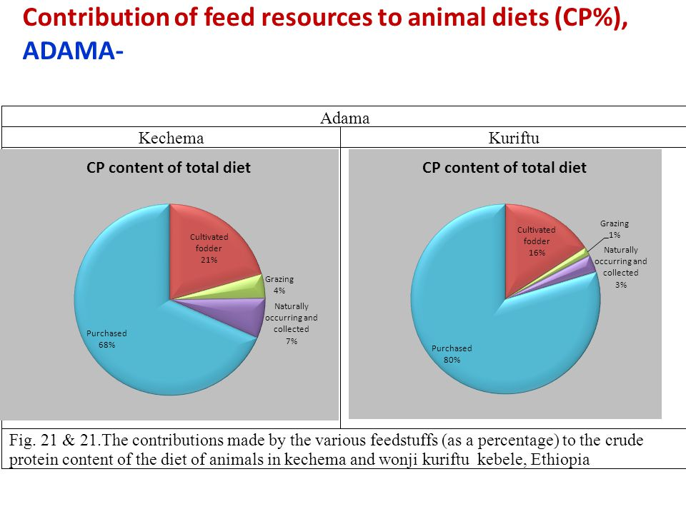 Contribution of feed resources to animal diets (CP%), ADAMA- Adama Kechema Kuriftu Fig. 21 & 21.The contributions made by the various feedstuffs (as a
