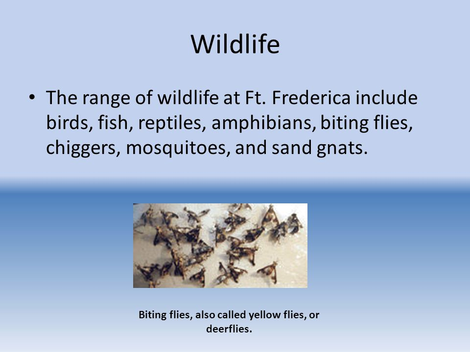 Wildlife The range of wildlife at Ft.