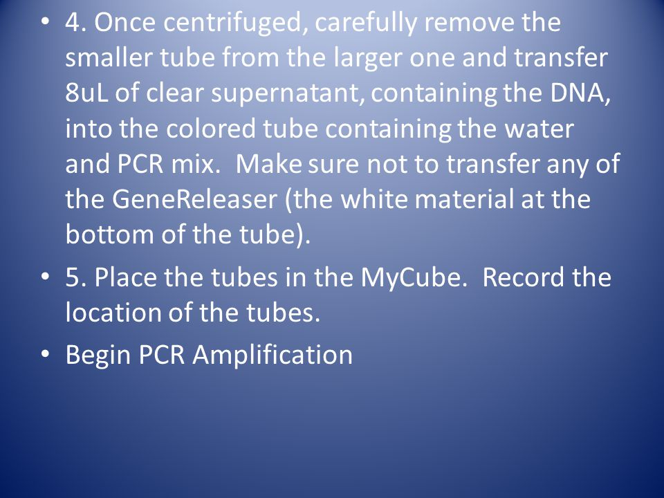 4. Once centrifuged, carefully remove the smaller tube from the larger one and transfer 8uL of clear supernatant, containing the DNA, into the colored