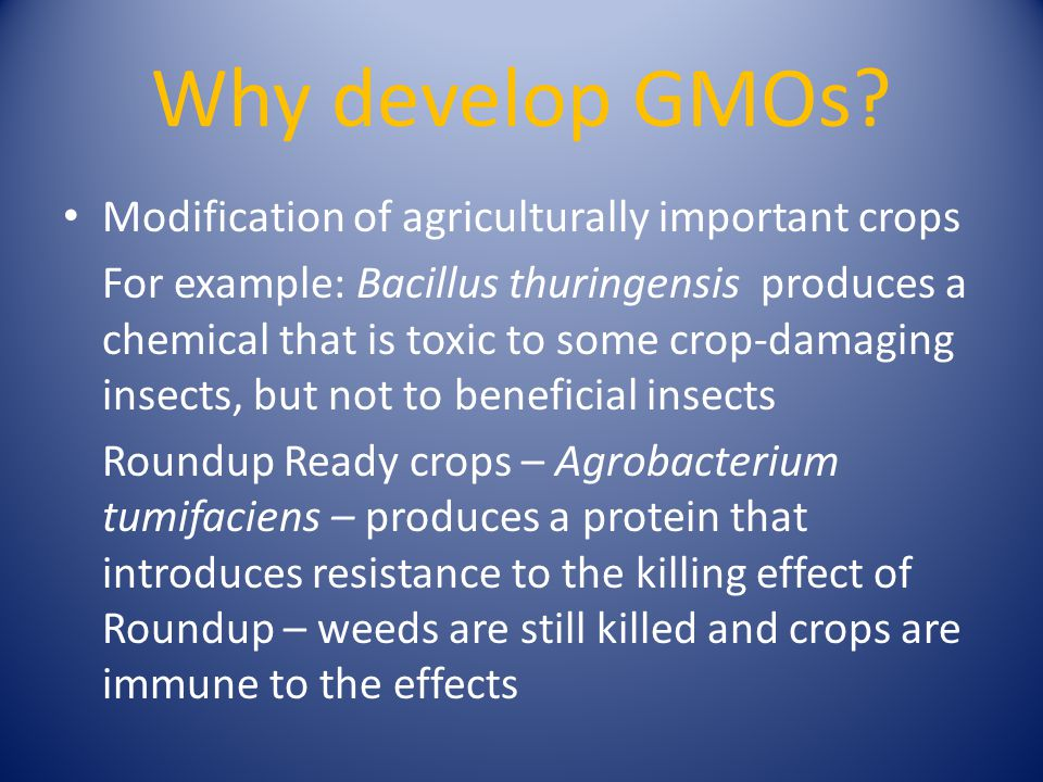 Why develop GMOs? Modification of agriculturally important crops For example: Bacillus thuringensis produces a chemical that is toxic to some crop-dam