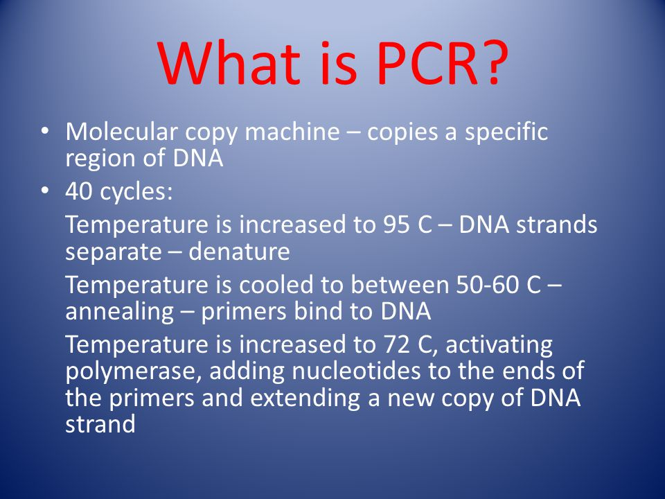 What is PCR? Molecular copy machine – copies a specific region of DNA 40 cycles: Temperature is increased to 95 C – DNA strands separate – denature Te