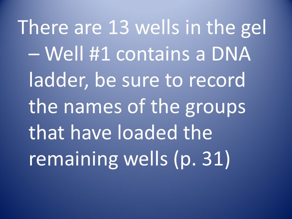 There are 13 wells in the gel – Well #1 contains a DNA ladder, be sure to record the names of the groups that have loaded the remaining wells (p. 31)