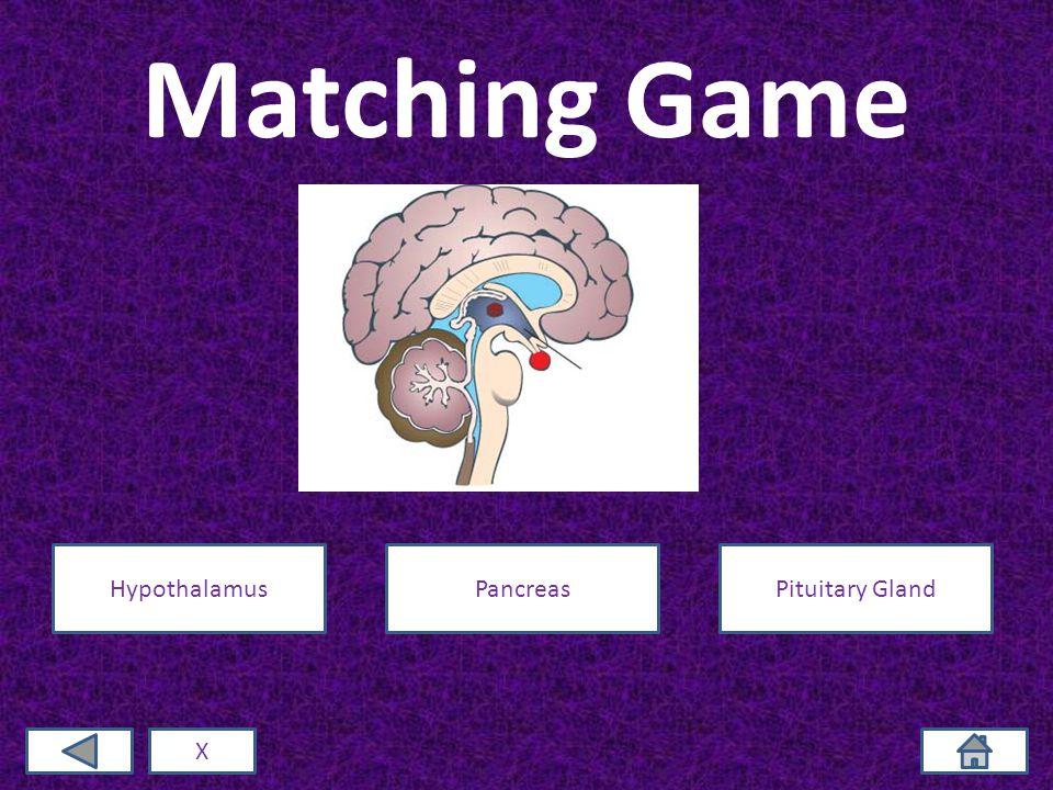 Matching Game X HypothalamusPancreasPituitary Gland
