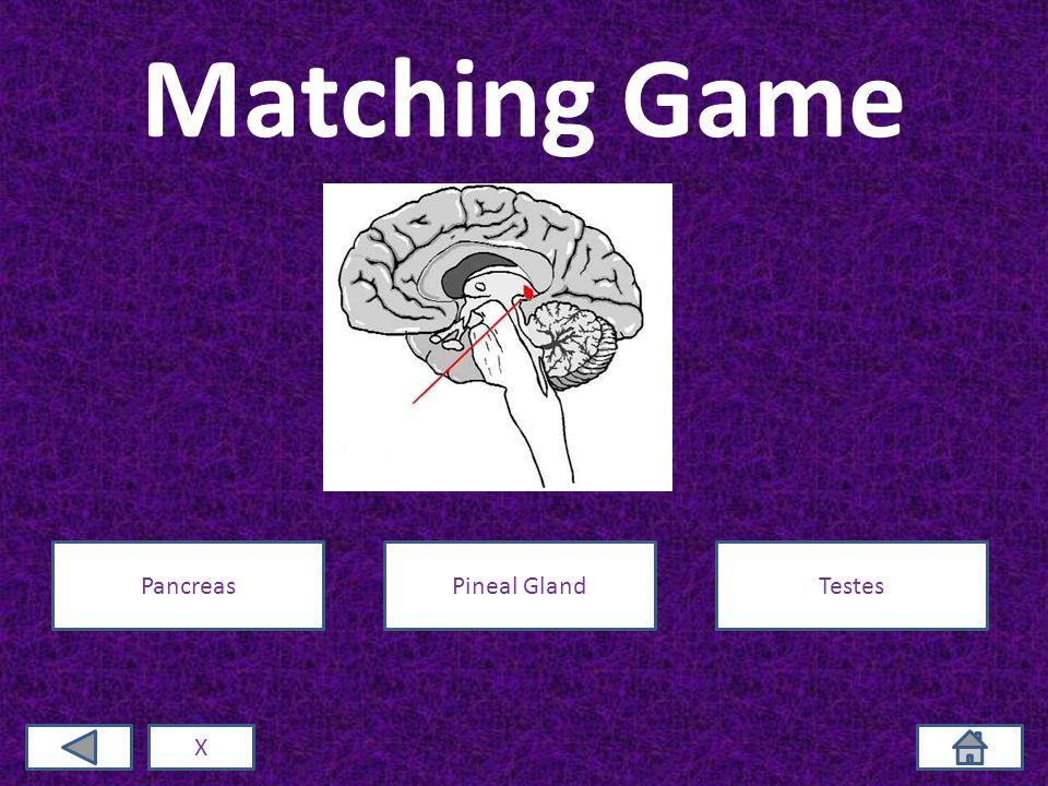 Matching Game X PancreasPineal GlandTestes