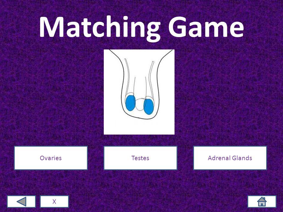 Matching Game X OvariesTestesAdrenal Glands