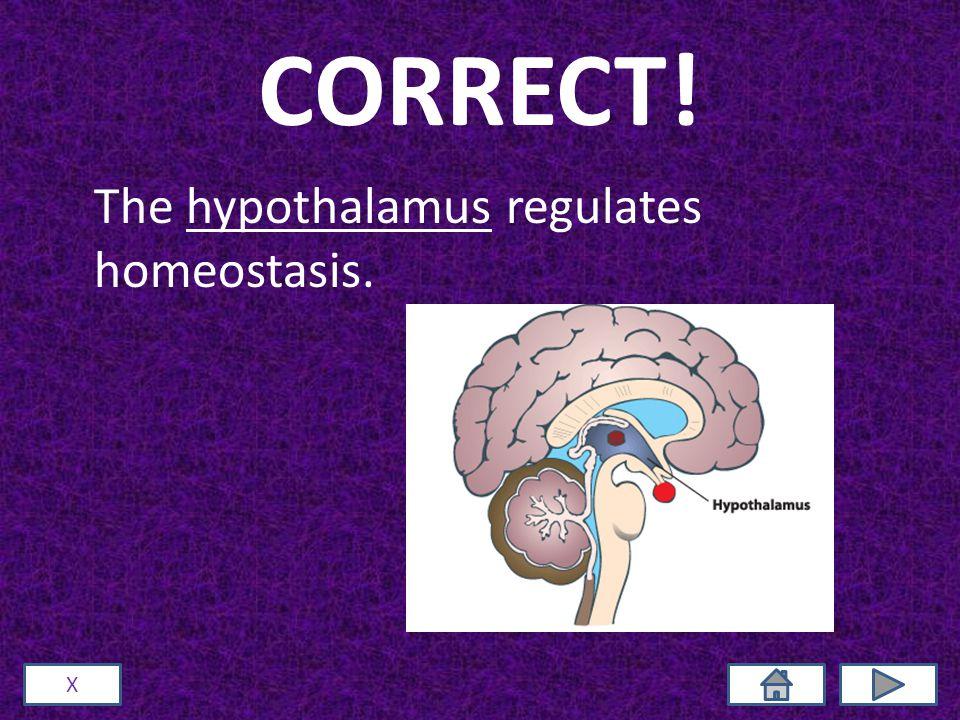 CORRECT! The hypothalamus regulates homeostasis. X
