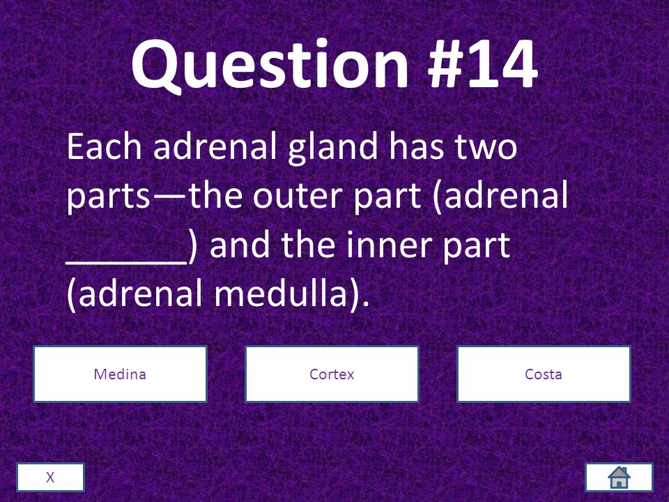 Question #14 Each adrenal gland has two parts—the outer part (adrenal ______) and the inner part (adrenal medulla).