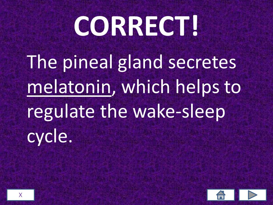CORRECT! The pineal gland secretes melatonin, which helps to regulate the wake-sleep cycle. X