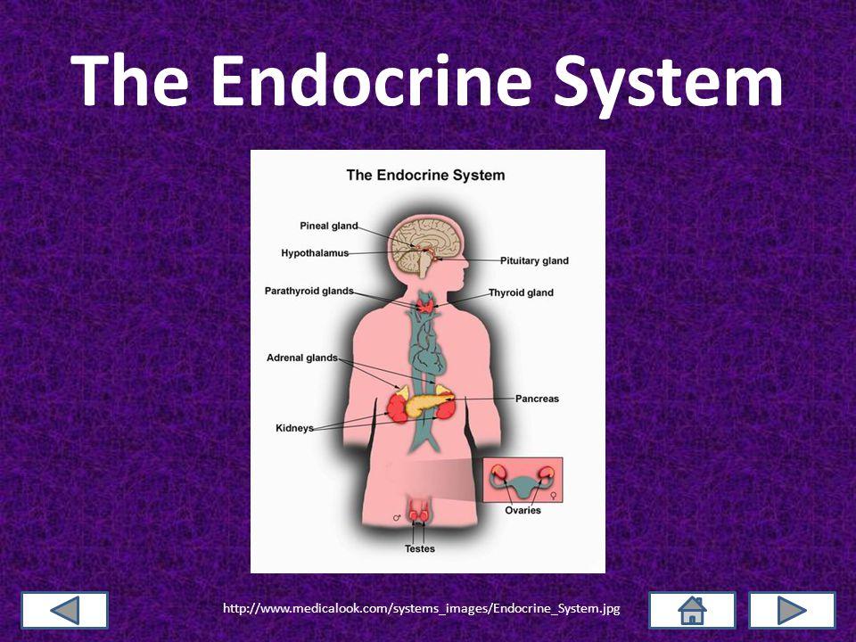 References Carter, J.Stein. Endocrine System. (2004).