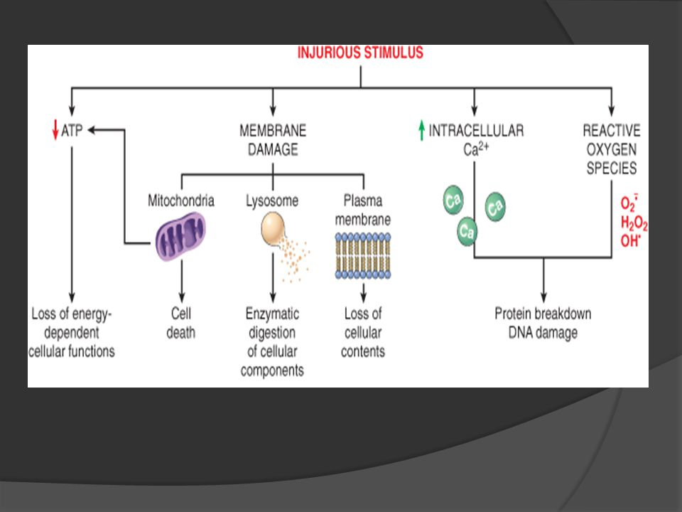 How the cell respond to injurious agent ?
