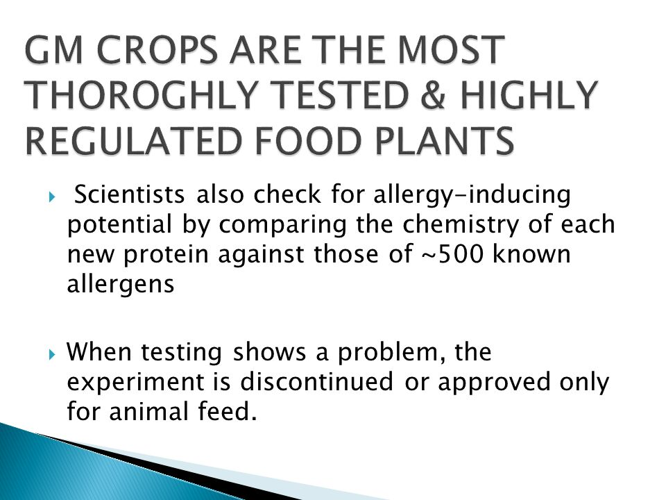  Scientists also check for allergy-inducing potential by comparing the chemistry of each new protein against those of ~500 known allergens  When testing shows a problem, the experiment is discontinued or approved only for animal feed.