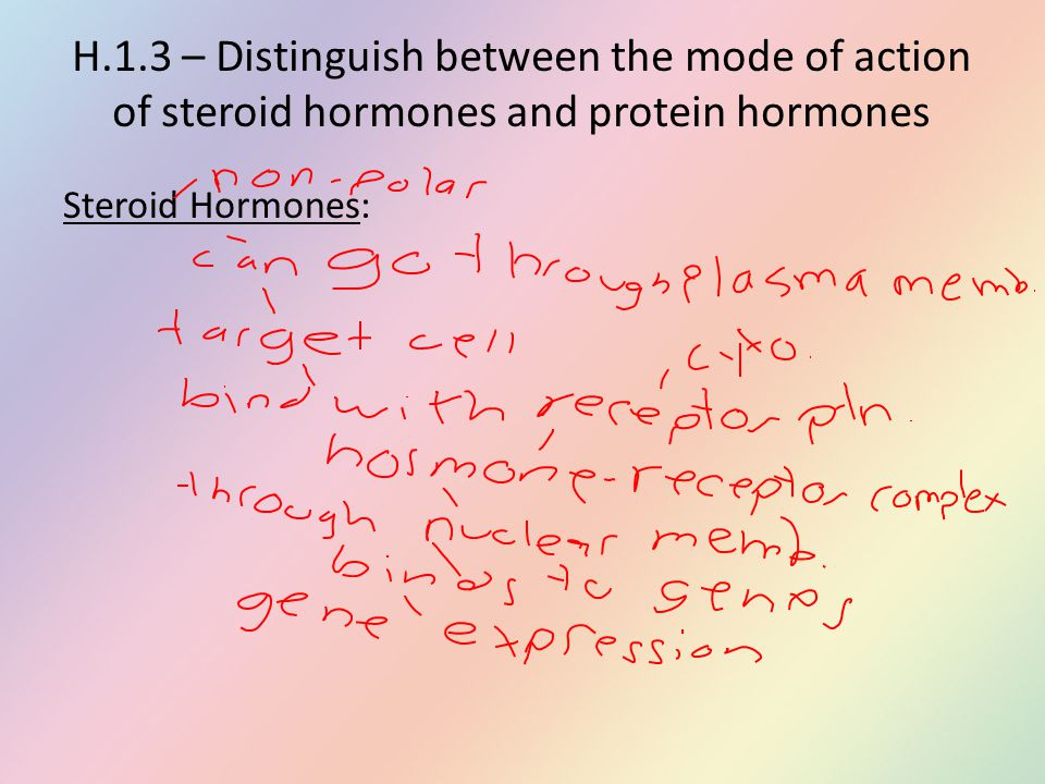 H.1.3 – Distinguish between the mode of action of steroid hormones and protein hormones Steroid Hormones: