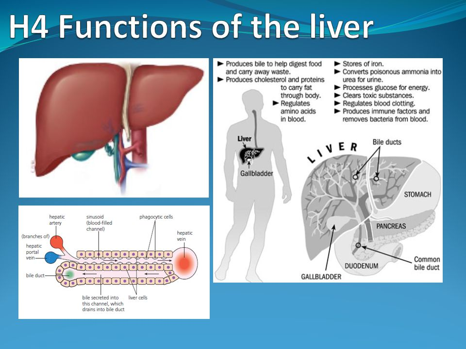 Assessment Statements H.4.1 Outline the circulation of blood through liver tissue, including the hepatic artery, hepatic portal vein, sinusoids and hepatic vein.