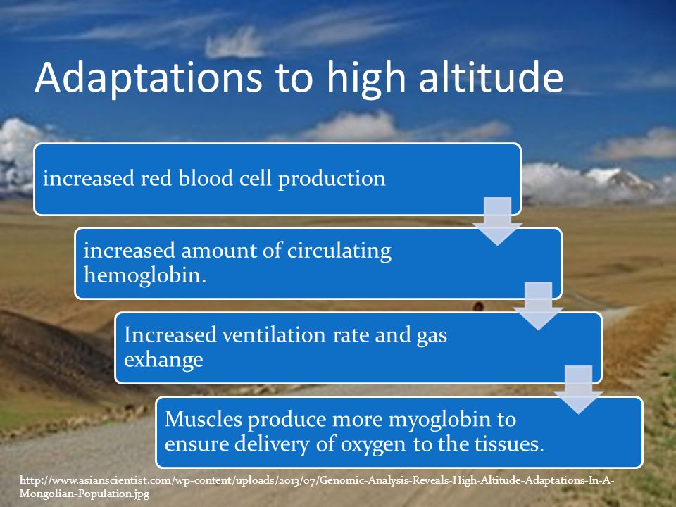 Adaptations to high altitude increased red blood cell production increased amount of circulating hemoglobin. Increased ventilation rate and gas exhang