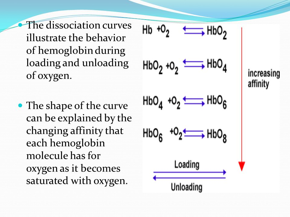 The dissociation curves illustrate the behavior of hemoglobin during loading and unloading of oxygen. The shape of the curve can be explained by the c