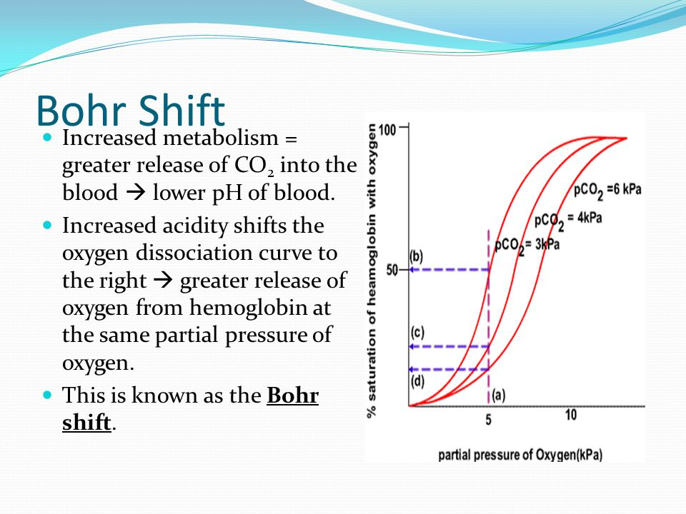 Bohr Shift Increased metabolism = greater release of CO 2 into the blood  lower pH of blood.