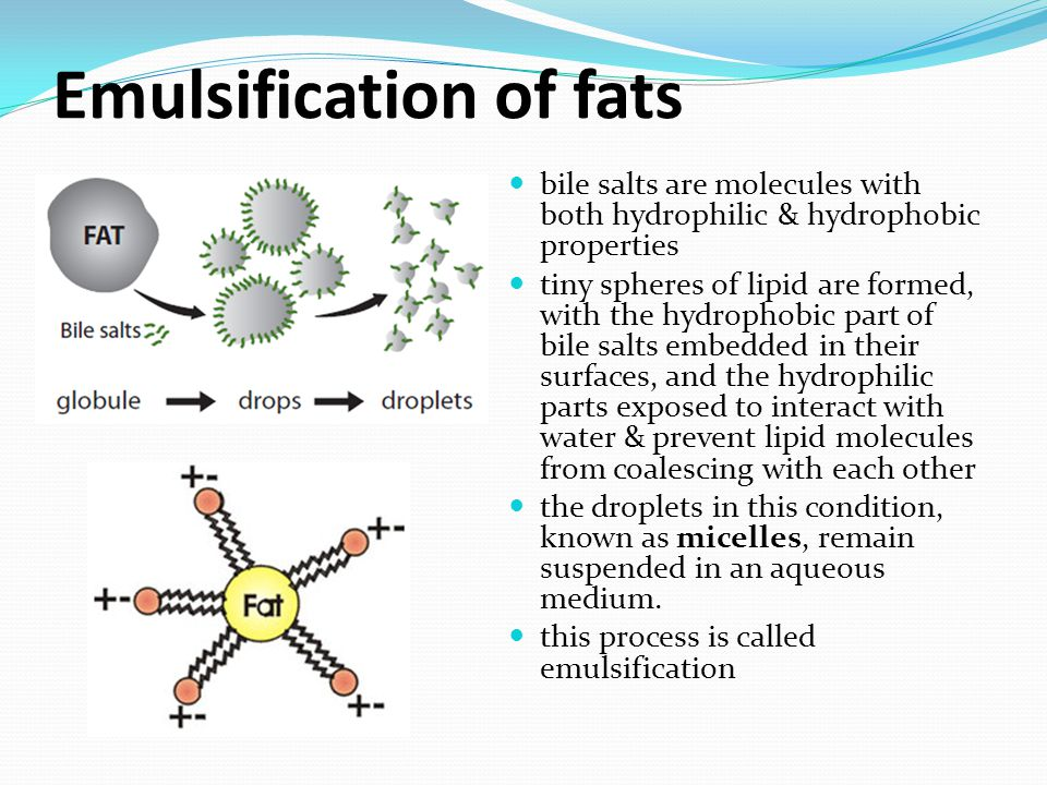 Emulsification of fats bile salts are molecules with both hydrophilic & hydrophobic properties tiny spheres of lipid are formed, with the hydrophobic