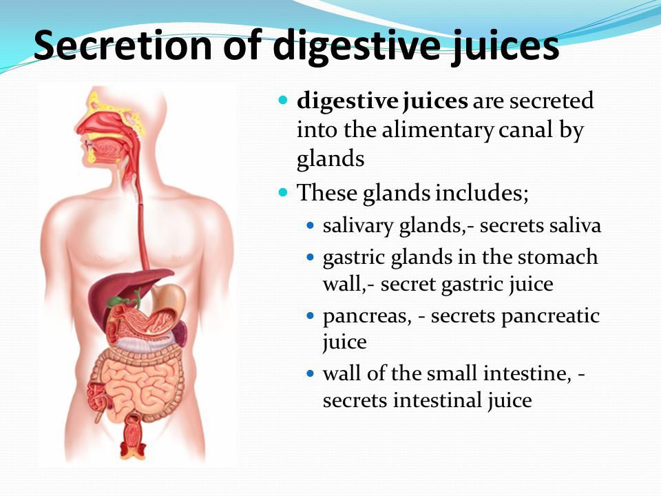 Secretion of digestive juices digestive juices are secreted into the alimentary canal by glands These glands includes; salivary glands,- secrets saliv