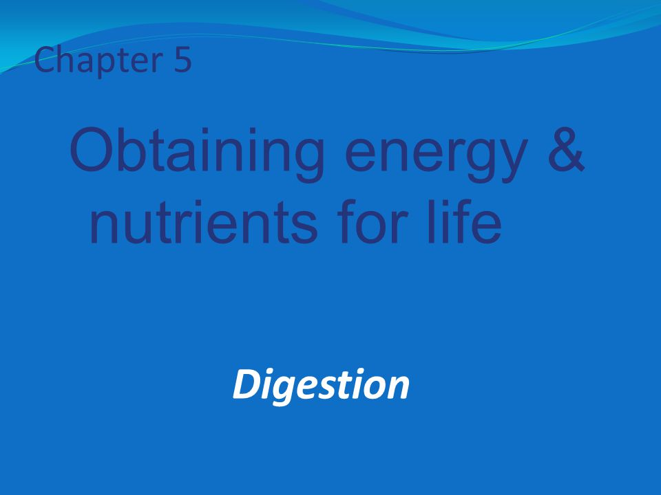Chapter 5 Obtaining energy & nutrients for life Digestion