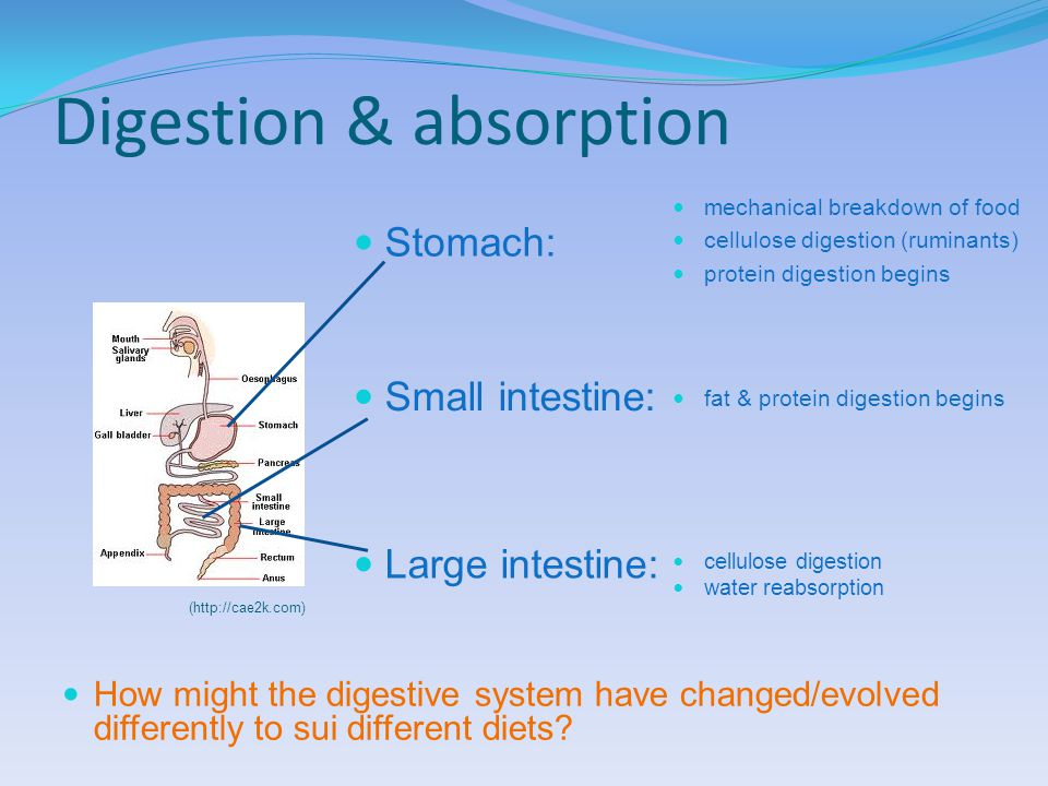 Digestion & absorption (http://cae2k.com) How might the digestive system have changed/evolved differently to sui different diets.